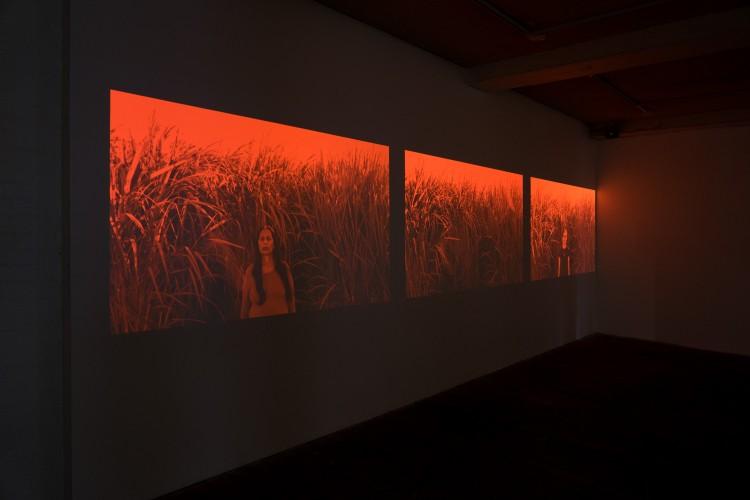 Bloodline Exhibition LR-19