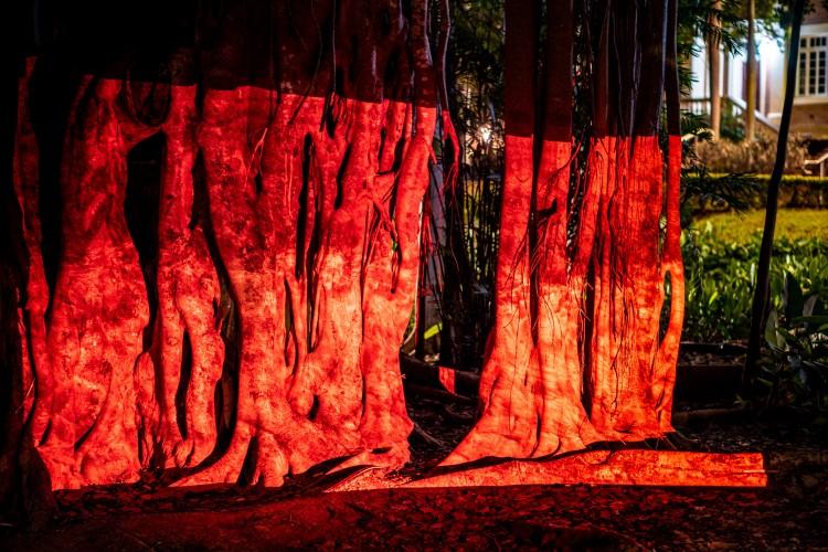 Botanica-Slideshow-0025-DSC03585